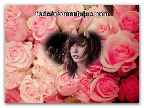 Fotomontajes De Rosas Gratis